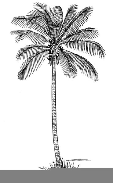 Palm Tree Clipart Black And White : clipart, black, white, Clipart, Black, White, Images, Clker.com, Vector, Online,, Royalty, Public, Domain