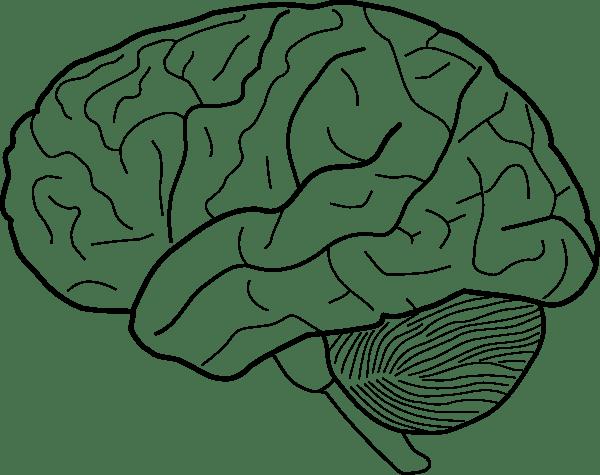Brain Clip Art At Clker.com