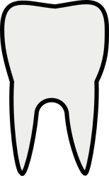 tooth molar clip clipart vector clker