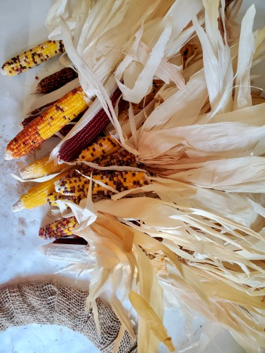 Indian corn for the wreath