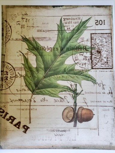 Vintage transfer image of an acorn printed in reverse for my canvas ideas