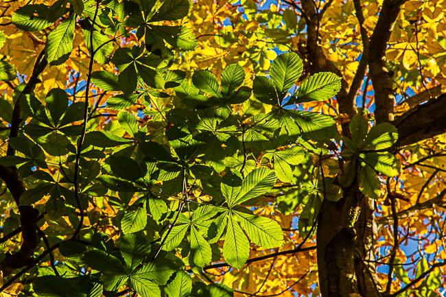 Leaves & Shadows