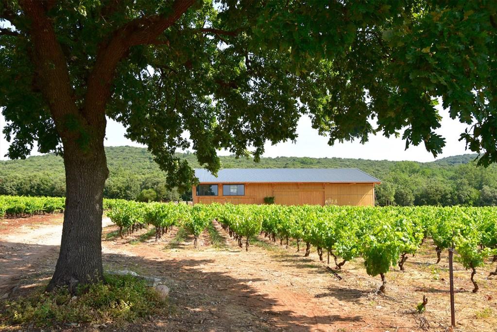 Domaine vin bio Languedoc