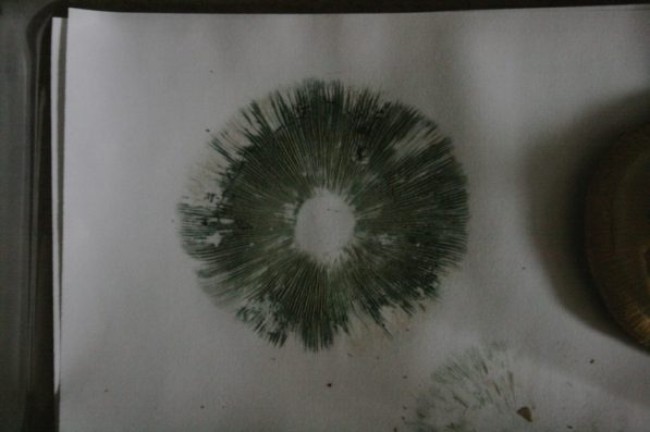 how to make a spore print
