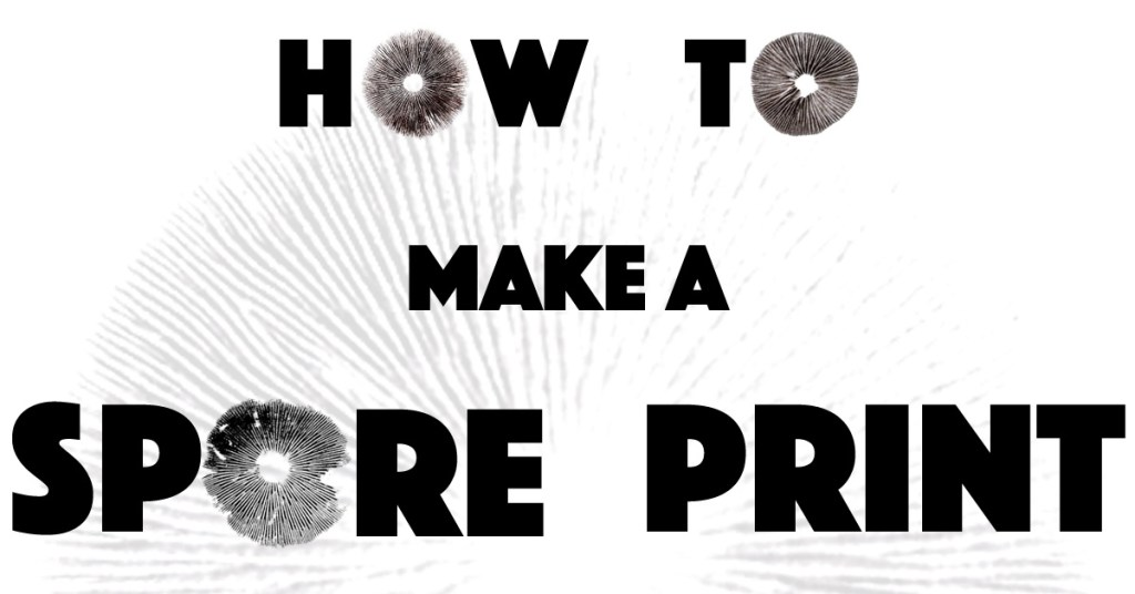 How to make spore prints