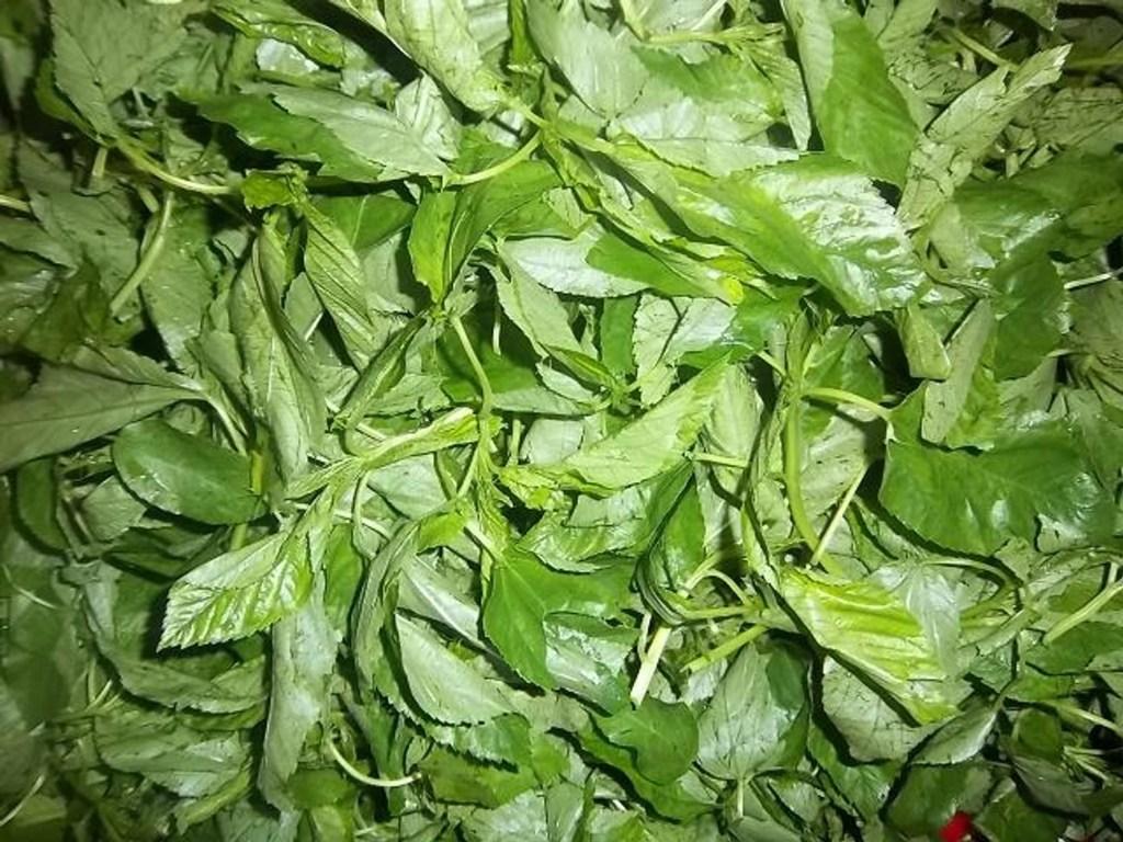 Lalo (Jute) leaves