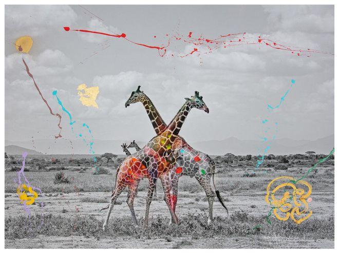Arno Elias, Giraffe Duet,  I'm not a trophy
