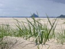 plages-autres-mers-et-plages-avranches-france-7898523212-914869