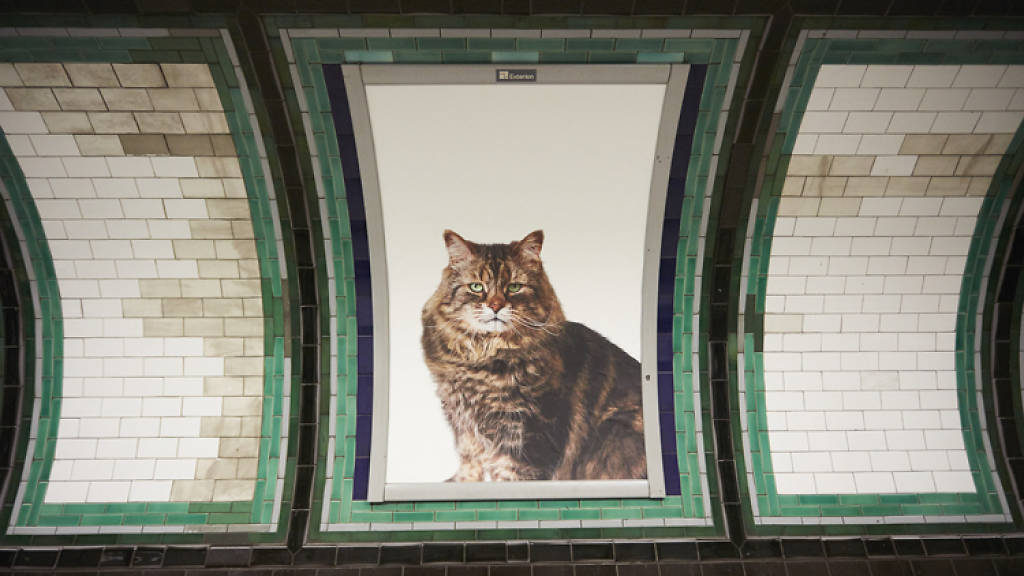 Cats not ads at Clapham Common underground station.