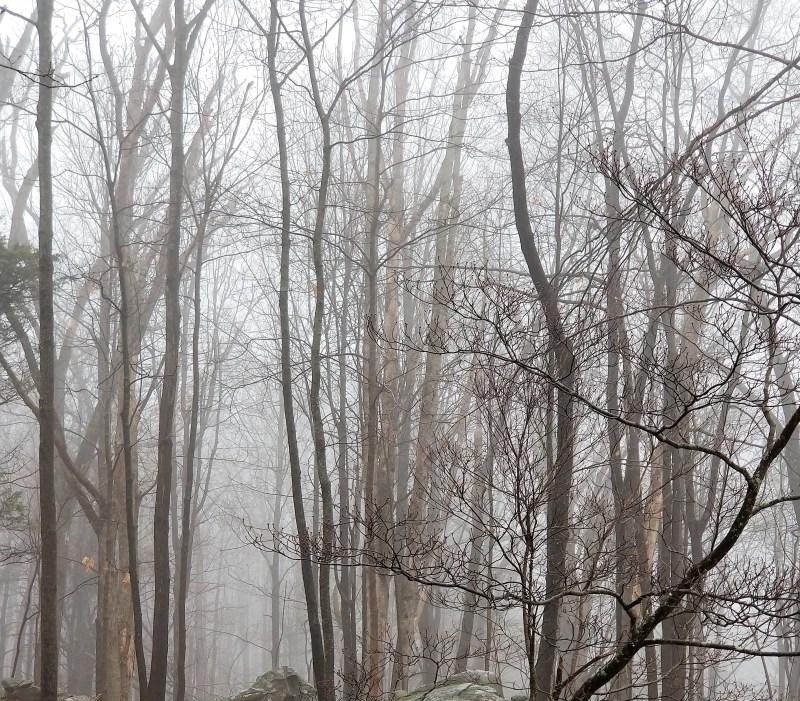 Fog is like an old friend