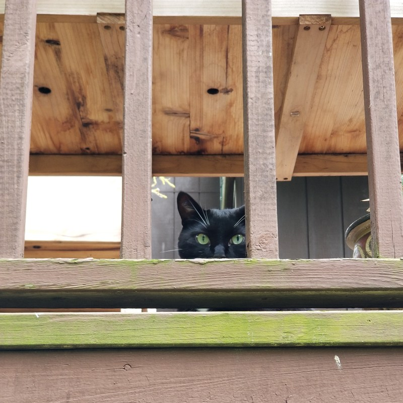 moss grows on the deck and soul-0 has very green eyes