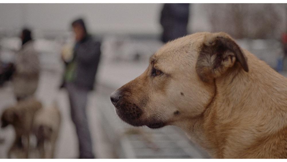 Crítica | Vida de Cão