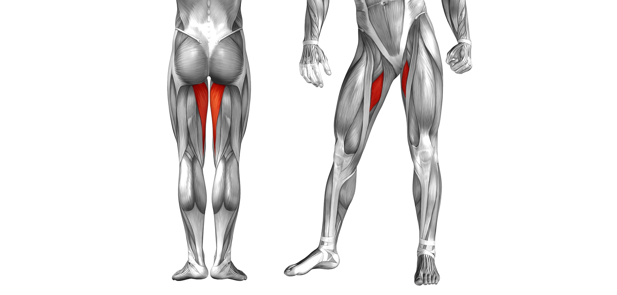 Hip Adductor Muscles Golf Loopy