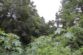 Meghalaya's Sacred Groves