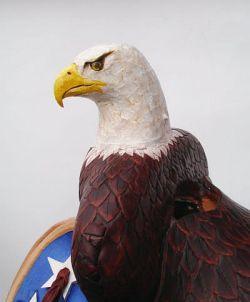 bald-eagle-kop-schv.jpg