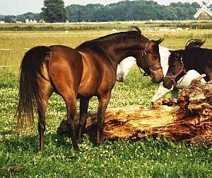tarq-met-pony.jpg