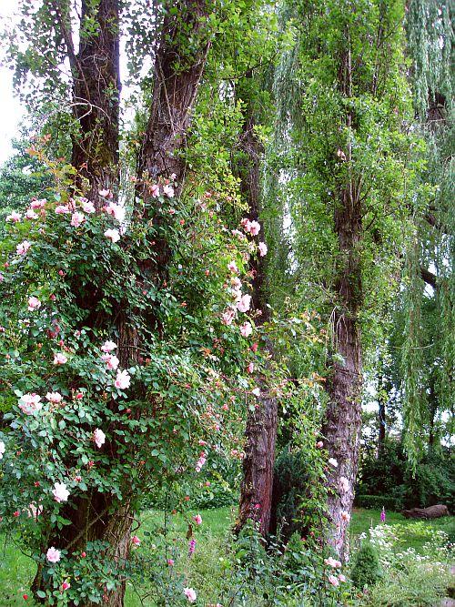 Arlettes garden