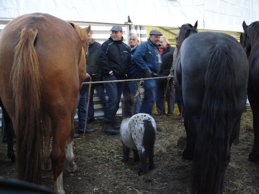 zuidlaardermarkt Horse fair art 22