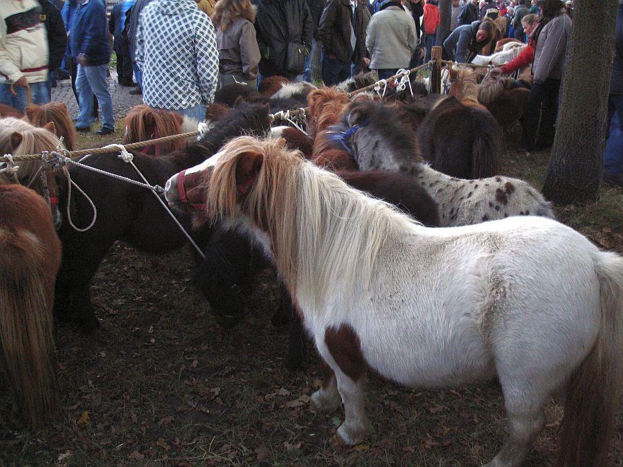 zuidlaardermarkt Horse fair art 8