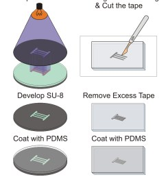 adhesive tape is attached to a clean glass slide cut with a scalpel and excess tape is carefully removed pdms cast is then fabricated from each mold  [ 929 x 1534 Pixel ]