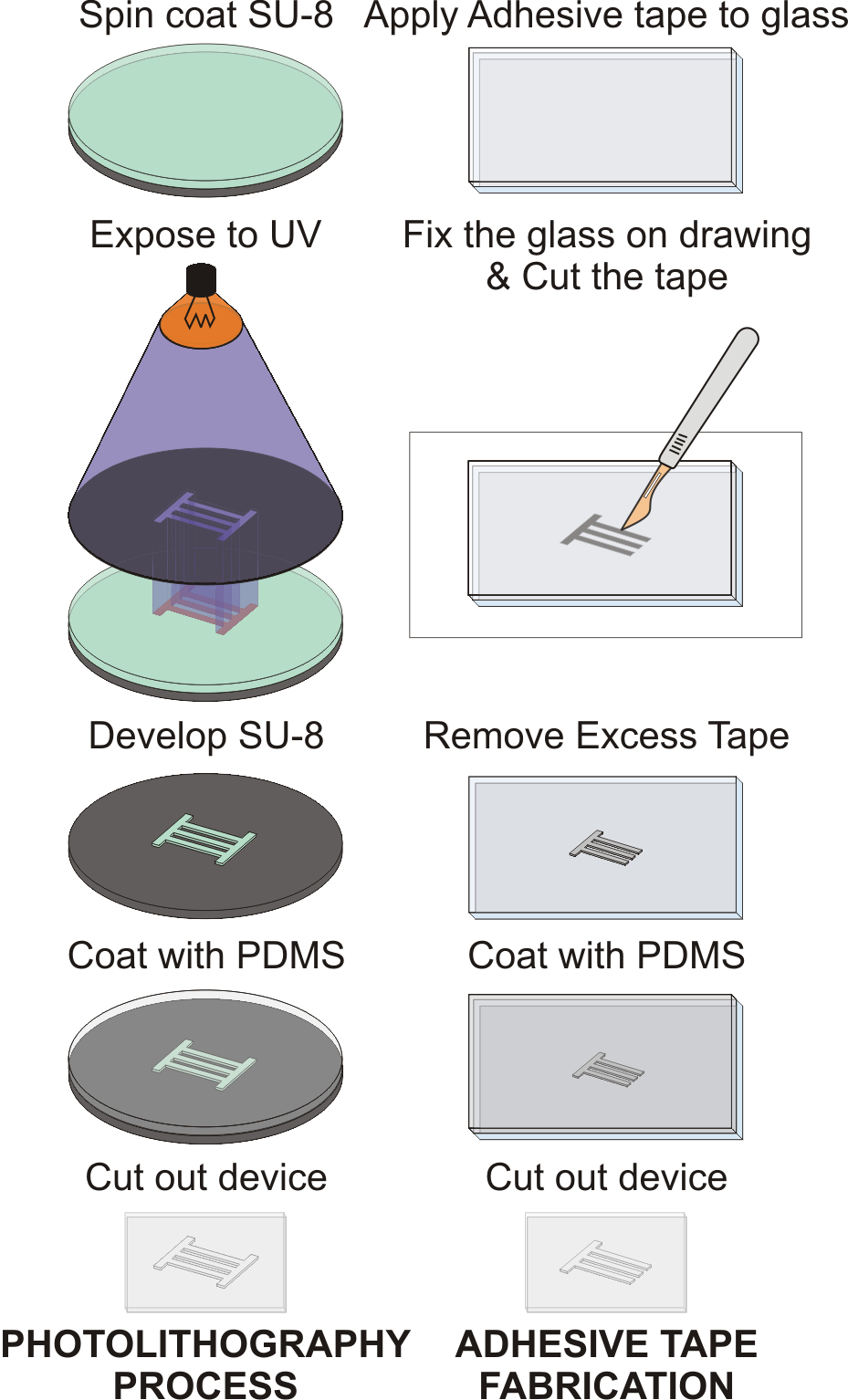 hight resolution of adhesive tape is attached to a clean glass slide cut with a scalpel and excess tape is carefully removed pdms cast is then fabricated from each mold