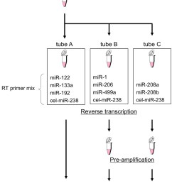 cel mir 238 external control must be included as one of the target mirnas in each tube  [ 900 x 1117 Pixel ]