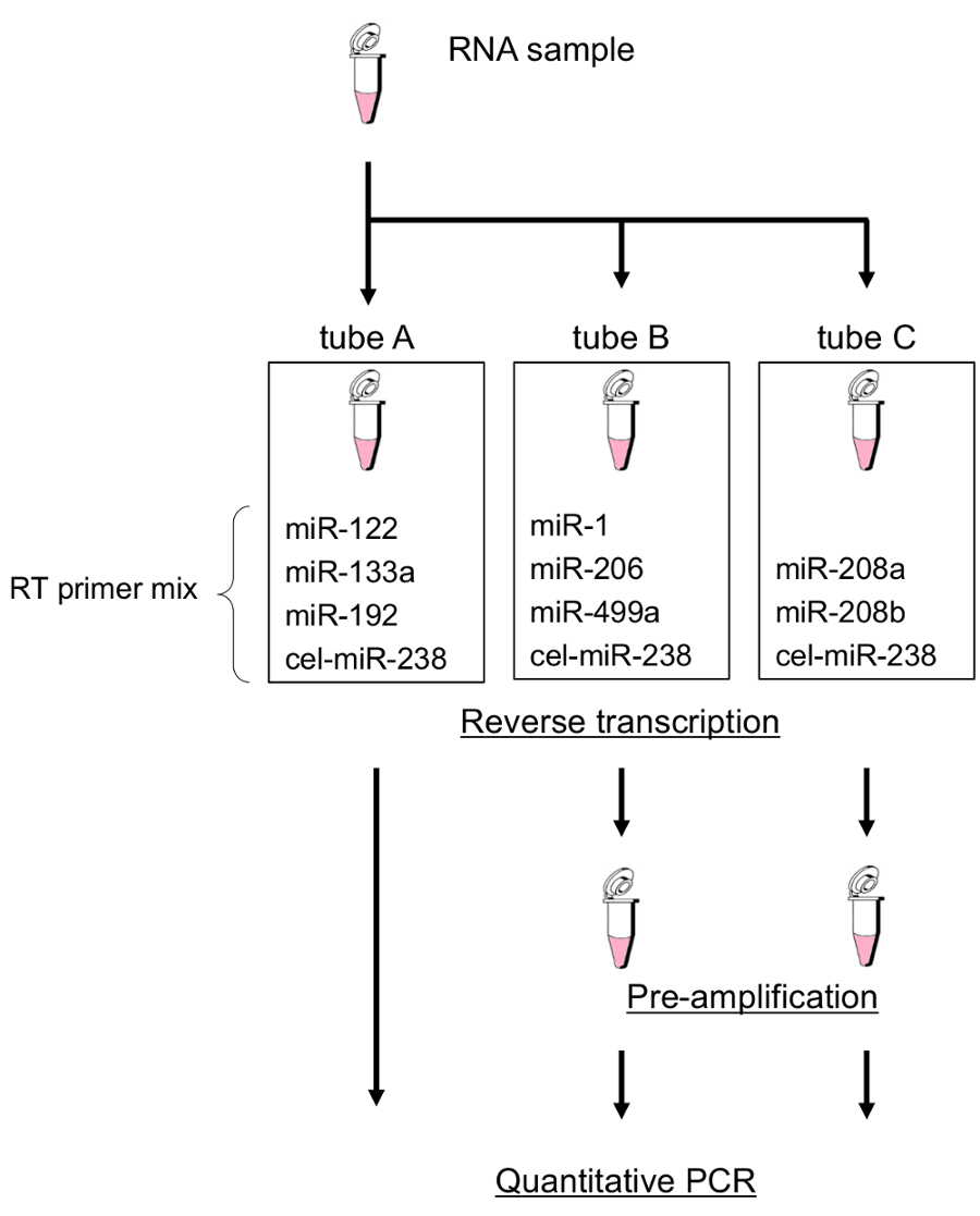 hight resolution of cel mir 238 external control must be included as one of the target mirnas in each tube