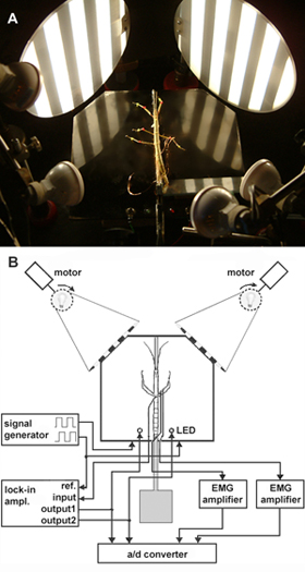 emg wiring diagram solder avital 4103 studying the neural basis of adaptive locomotor behavior in insects slippery surface marked with fluorescent pigments for leg tracking and wired recording tarsal contact measurement b