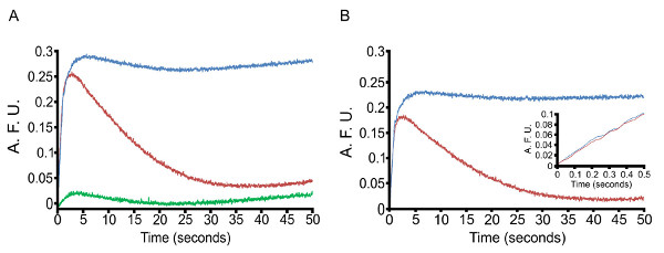 Measuring Intracellular Ca2 Changes In Human Sperm Using