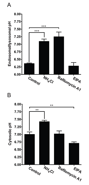 Simultaneous pH Measurement in Endocytic and Cytosolic