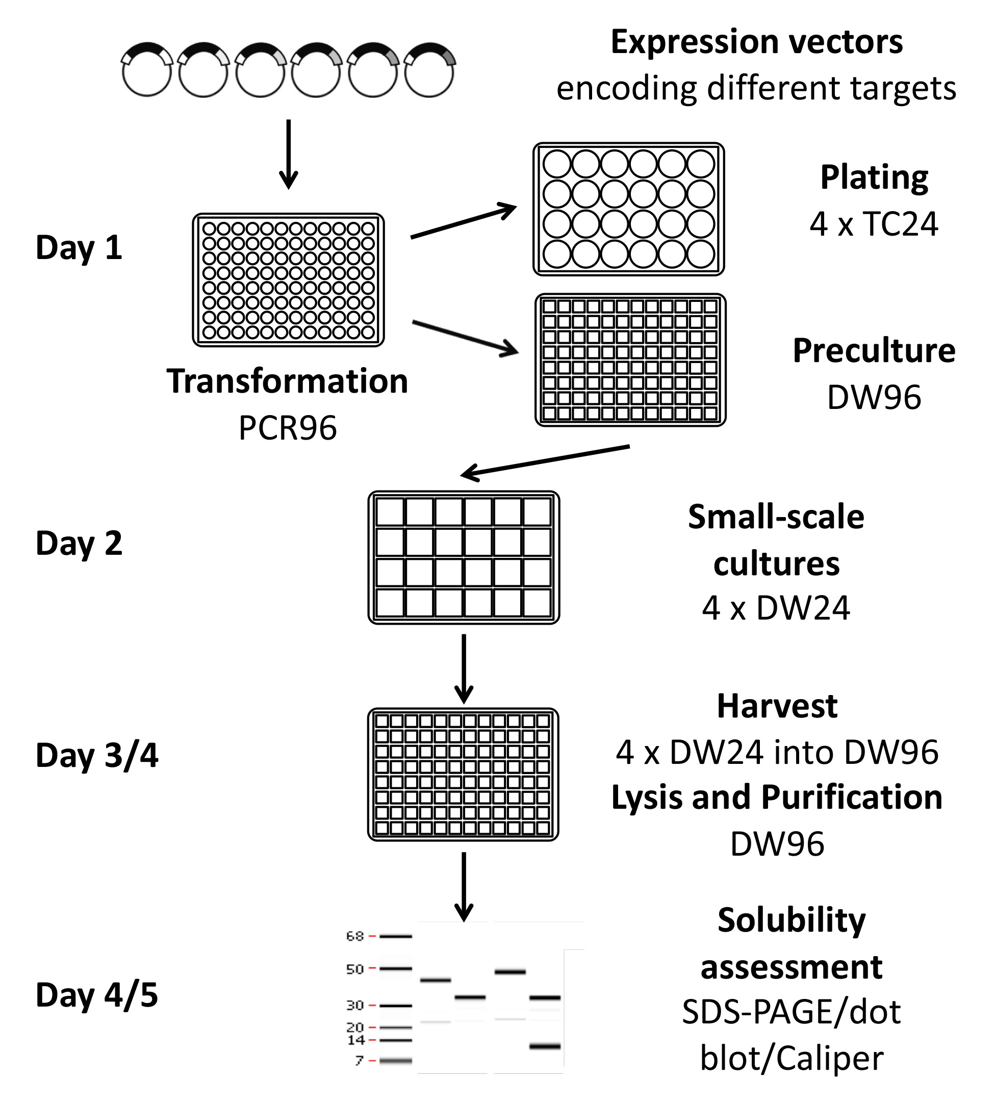 High Throughput Quantitative Expression Screening And