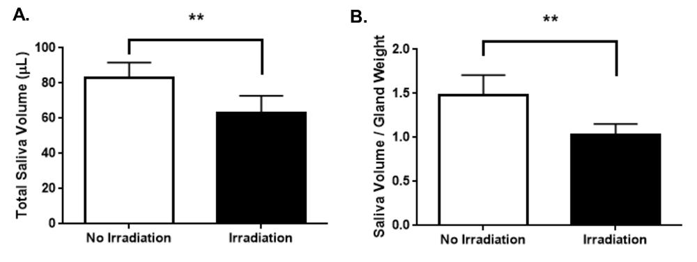 Murine Salivary Functional Assessment via Pilocarpine