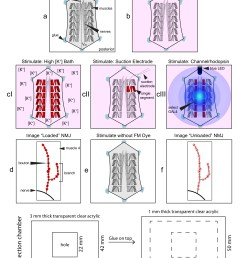 the bottom panel shows the construction parameters and dimensions for the transparent acrylic chamber used for these studies  [ 2550 x 3300 Pixel ]