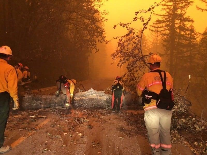 Wildland firefighting crews fighting the Holiday Farm Fire work to clear a felled tree obstructing a road in the Willamette National Forest on Wednesday, Sept. 8, 2020.
