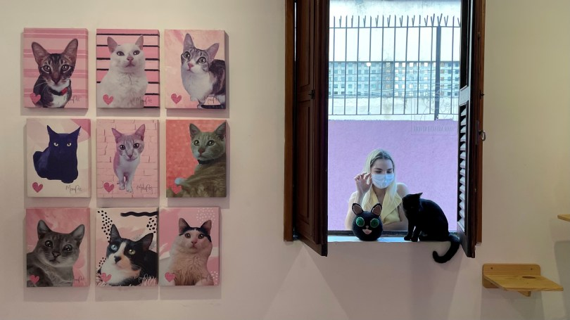 A woman looks at a cat at the Rio cat cafe or Gato Cafe, where customers can relax while adopting a feline, in Rio de Janeiro, Brazil, July 10, 2021. Picture taken July 10, 2021. REUTERS/Leonardo Benassatto