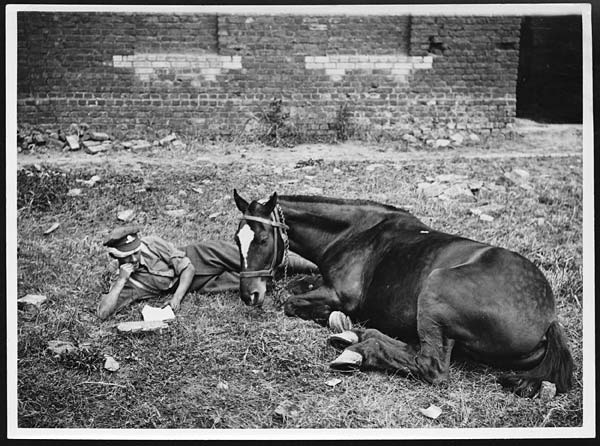 9 Arresting Images of Horses in the First World War
