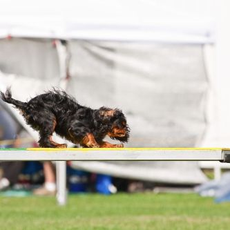 Agility Training Classes