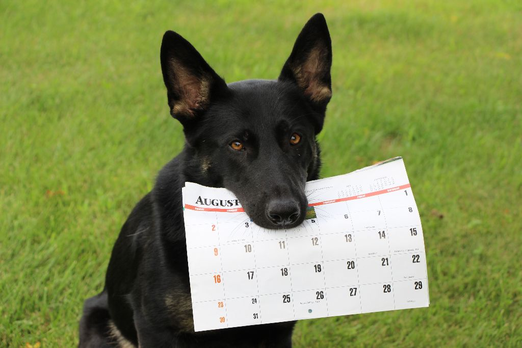 Schedule of Dog Training Classes, Activities, Events in Twin