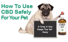 How to Use CBD Safely for Your Pet Featured Image