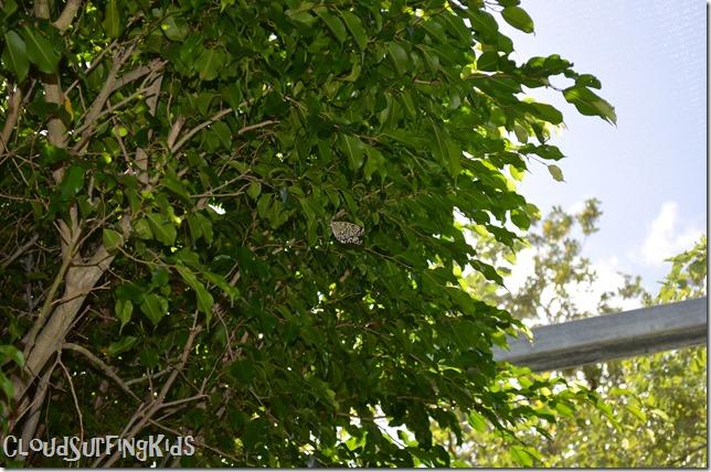 Charlotte Amalie Butterfly Garden Butterfly in Tree