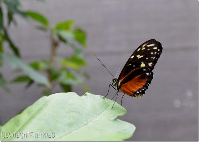 Charlotte Amalie Butterfly Garden Butterfly