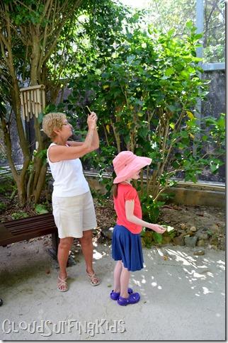 Charlotte Amalie Butterfly Garden photography