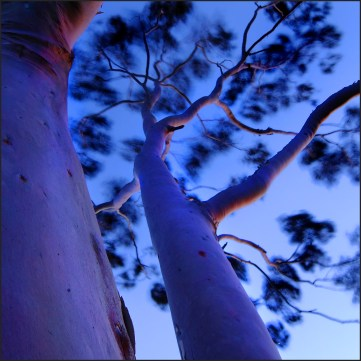 Ghost gum sunset CG