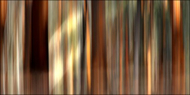 Dryandra woodland6CG