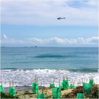 The Channel 7 news helicopter hovering over the shark