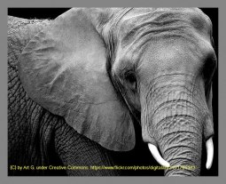 An elephant is the logo for Hadoop. This image is used for the Apache Hadoop Tutorial