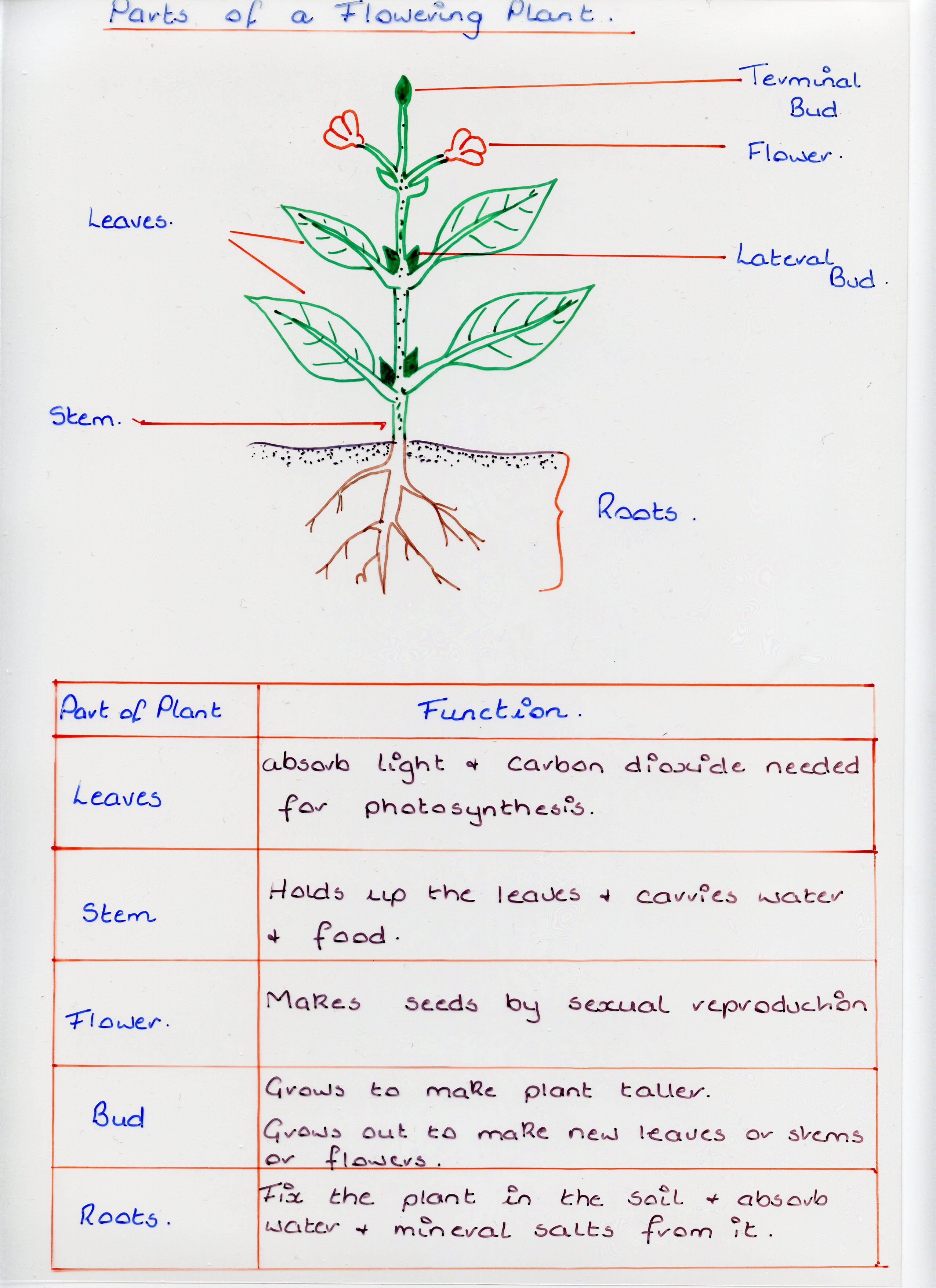 Flowering Plants  Clounagh Sciences Blog