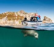 Lundy Seal Nick Blake 16