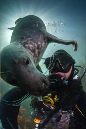 Lundy Seal Nick Blake 3