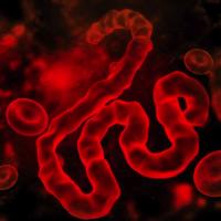 Hundreds Of Migrants Flee Ebola-Stricken Congo For San Antonio, Texas